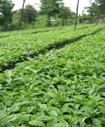 Soil Fertility and Plant Nutrition