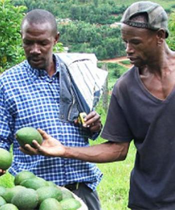 Agribusiness Finance