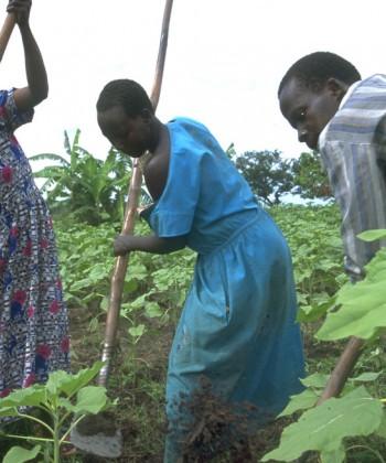 Gender and Agricultural Development
