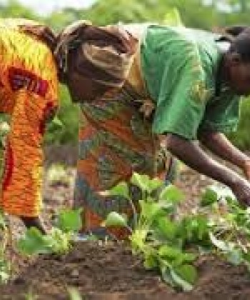 GENDER IN AGRICULTURAL DEVELOPMENT
