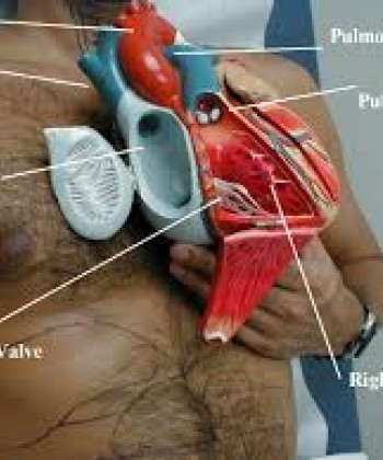 Surgical Physiology of the Cardiovascular