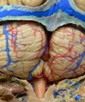Neurosurgical Anatomy