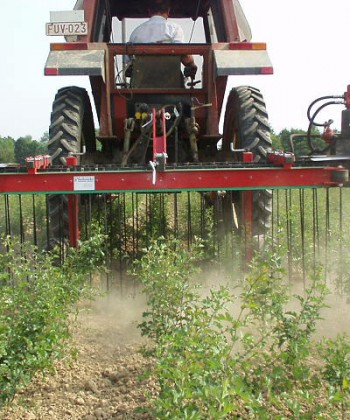 Forest Pest, Disease and Weed Management