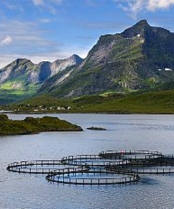 Environmental Health in Aquaculture
