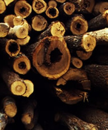 Biomass Energy Production and Conservation