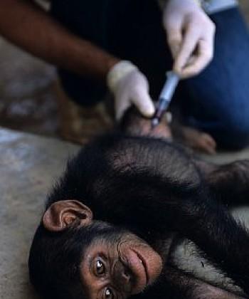 Wildlife Health and Diseases
