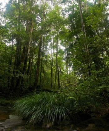 Forestry in Development
