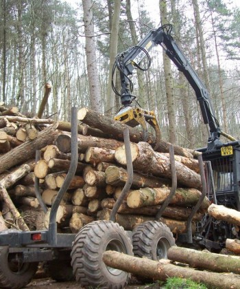 Forestry Business Management
