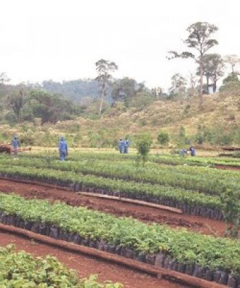 Problem skills in forestry extension