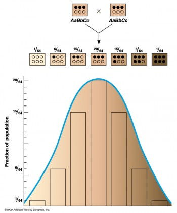 Quantitative Genetic Theory
