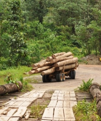 Forestry and Food Security