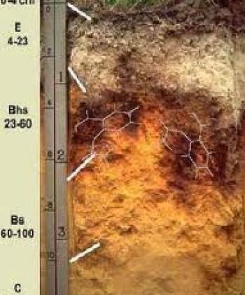SOIL BIOLOGY I