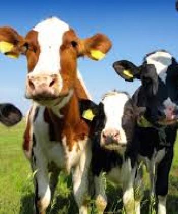 Livestock Economics I