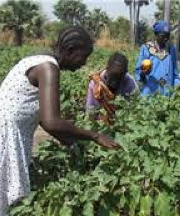 COOPERATIVES AND AGRIBUSINESS