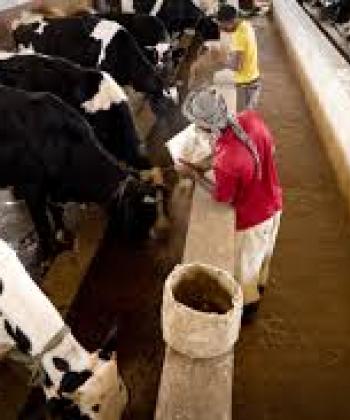 Livestock Product Marketing